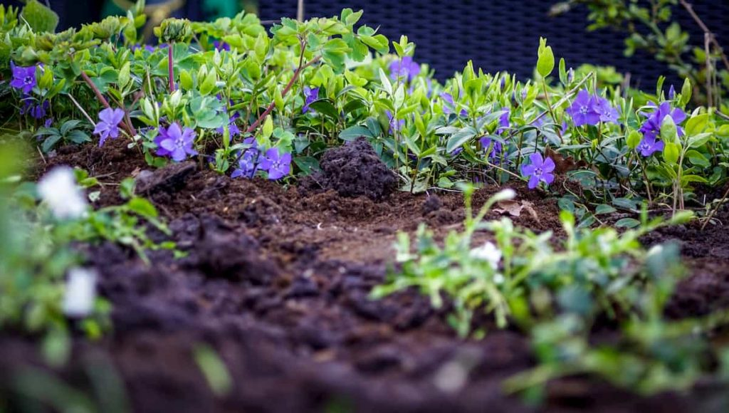 getting rid of mice in a garden naturally