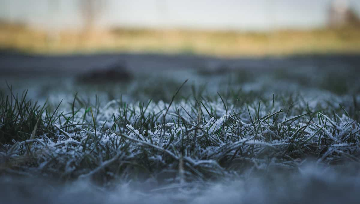 can you mow your lawn in the winter