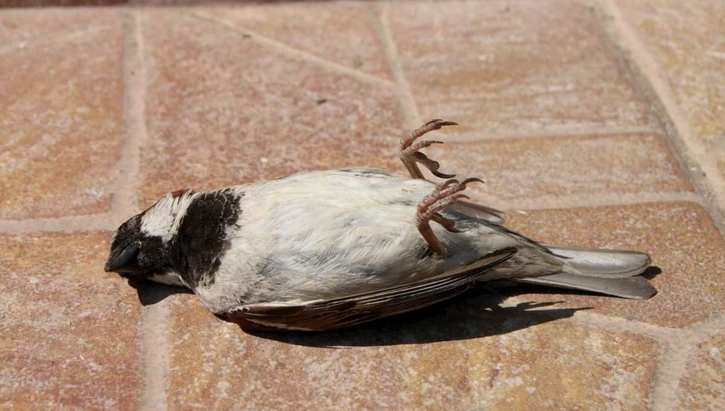 what to do with a dead bird in your yard