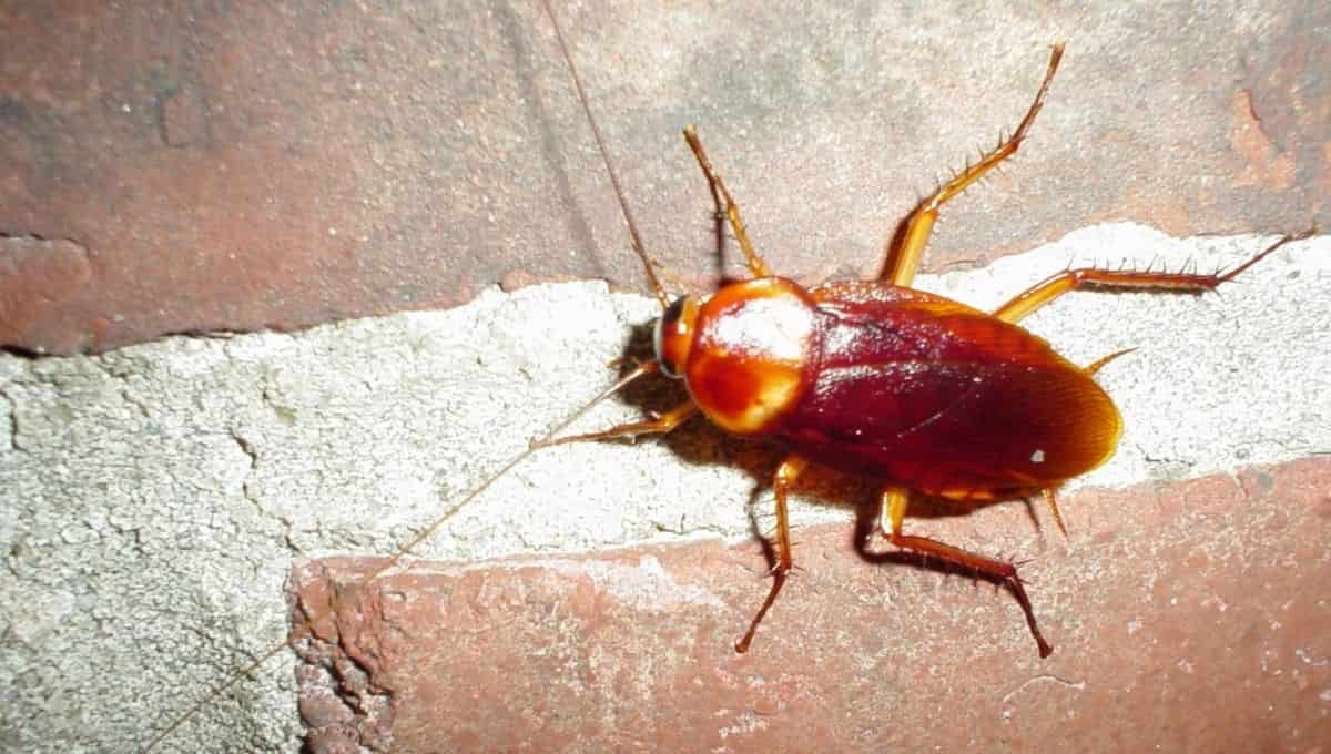 can i sue my neighbors for roaches