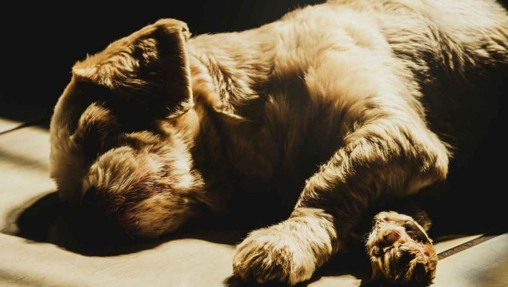 how long can you keep a dead dog before burial
