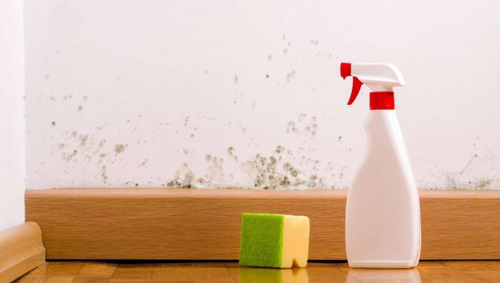killing mold with vinegar